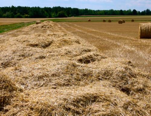 Récolter la menue paille : réduire la pression adventices et valoriser la biomasse